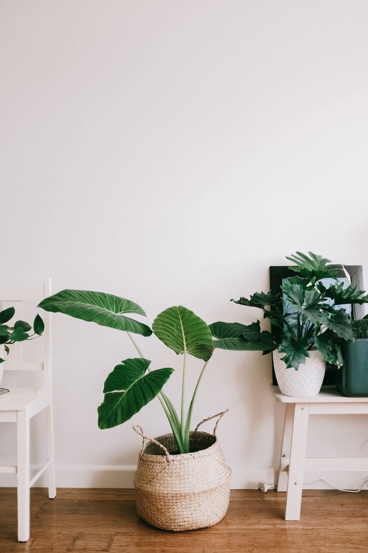 Four Easy Ways to Improve your Indoor Air Quality